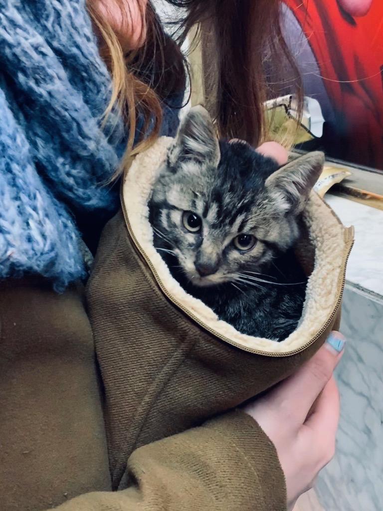 the cutest little kitten in a fluffy hat