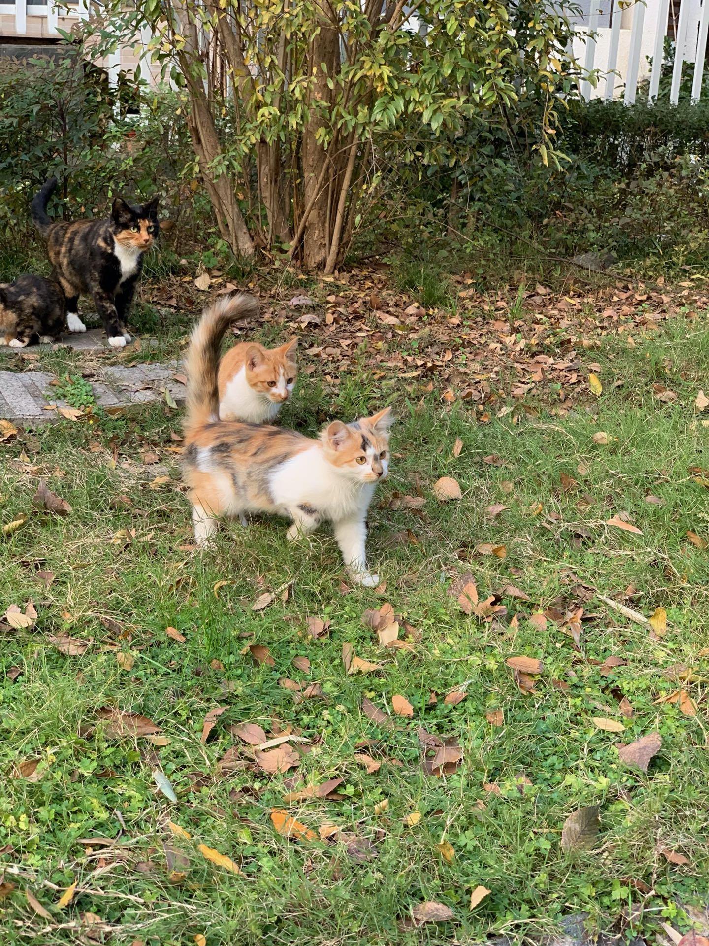 Cats of Nanjing II
