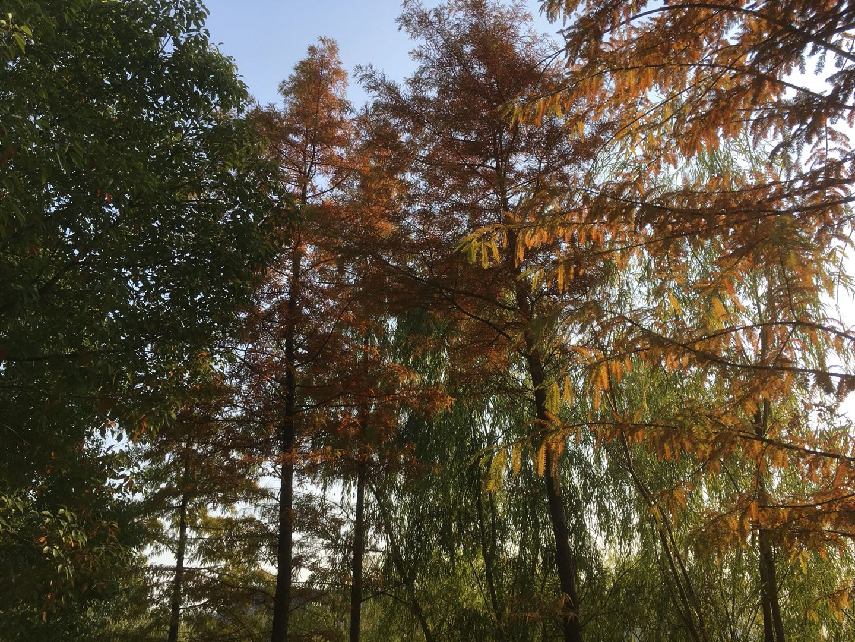 Herbst in Nanjing I