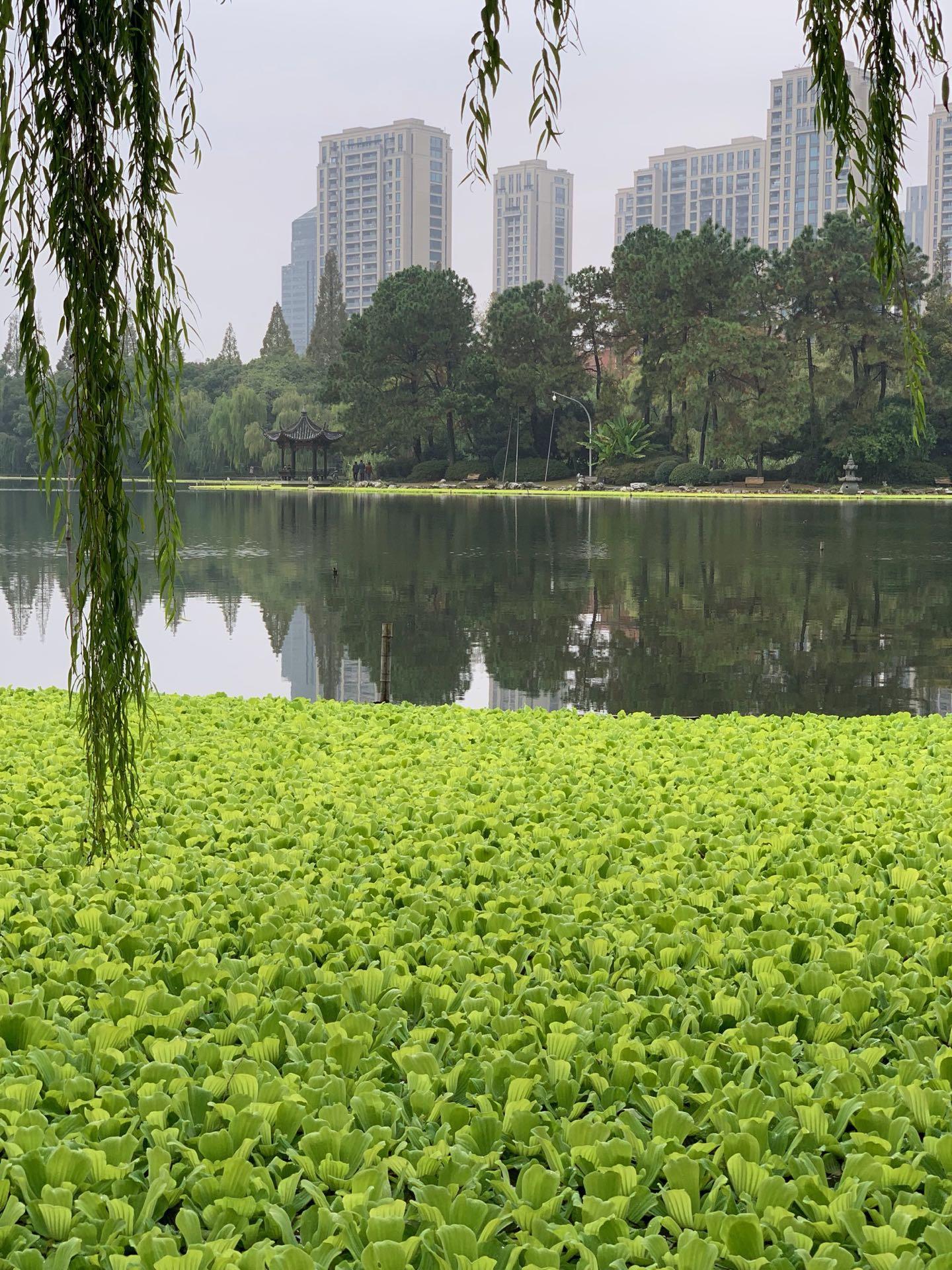 Herbst in Hangzhou